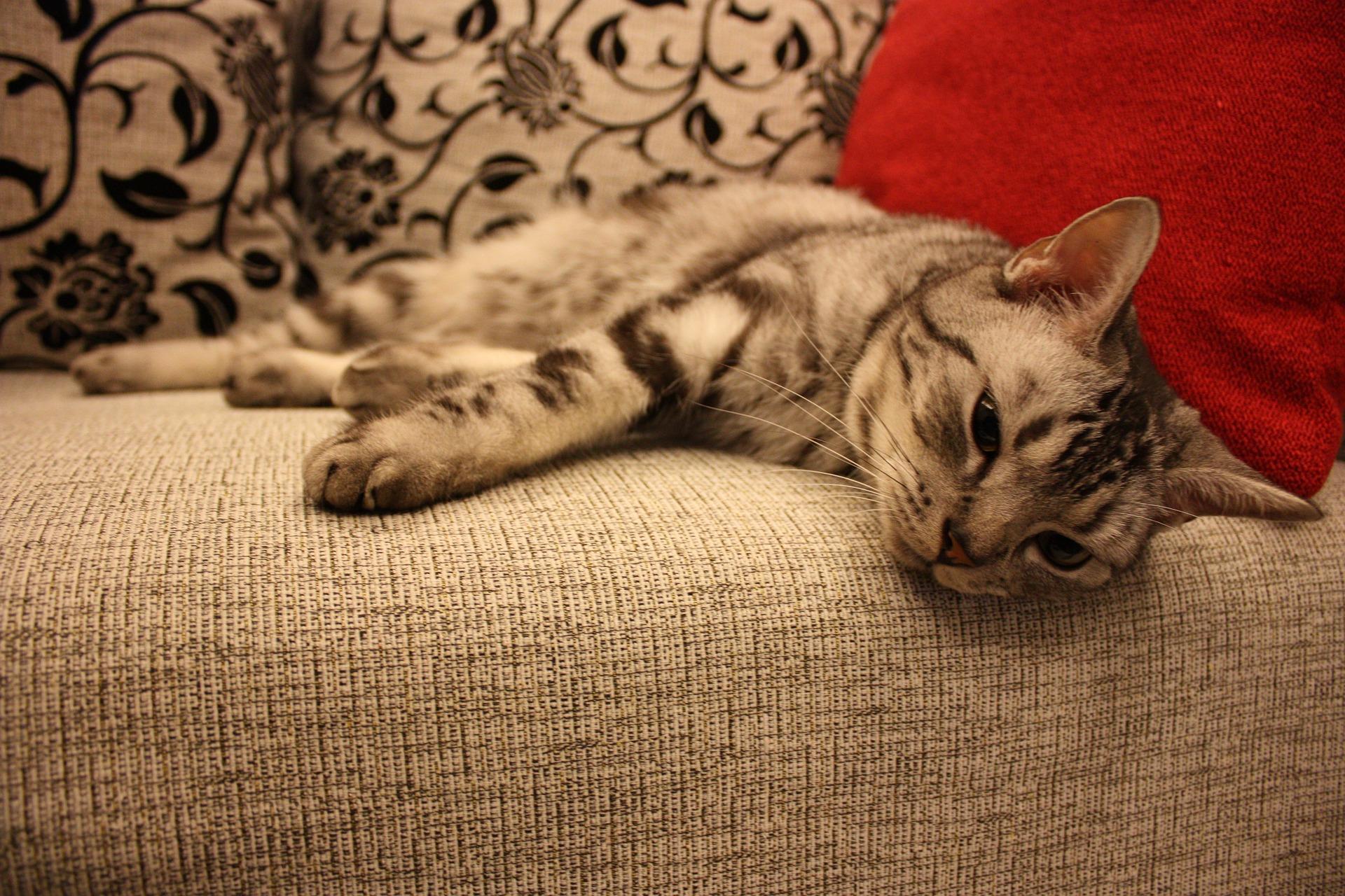 cat-682009_1920