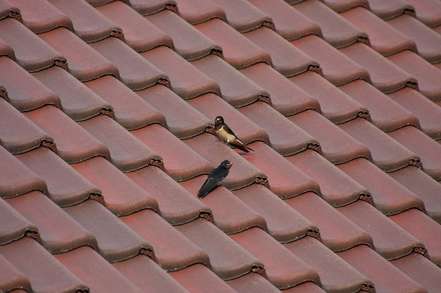 roof-1140785_640